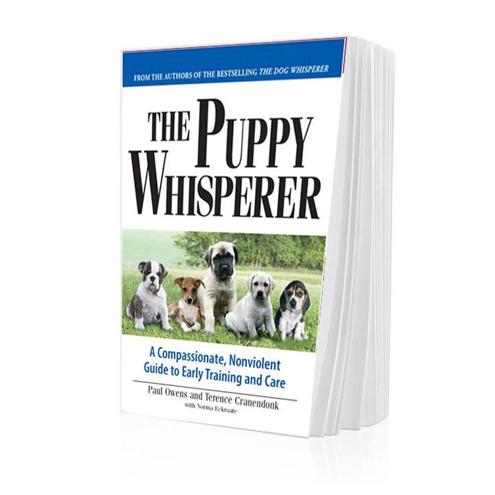 Dog Whisperer Dog Training