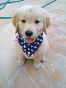July-4th-pup-v2