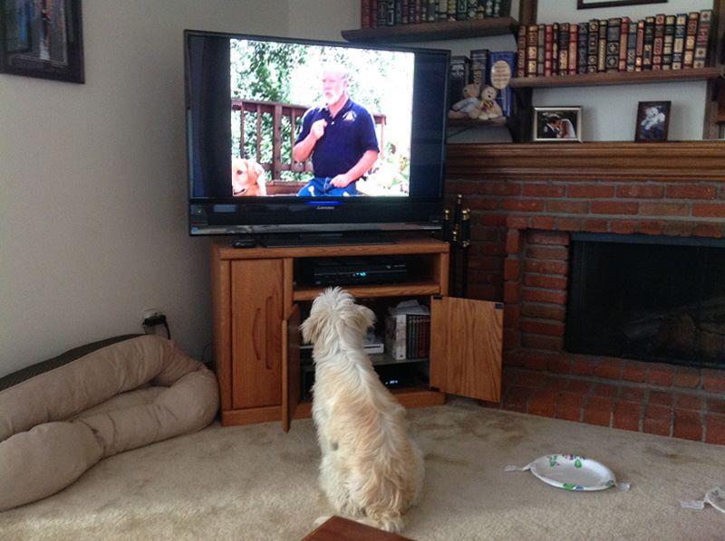odw-pup-watching-paul