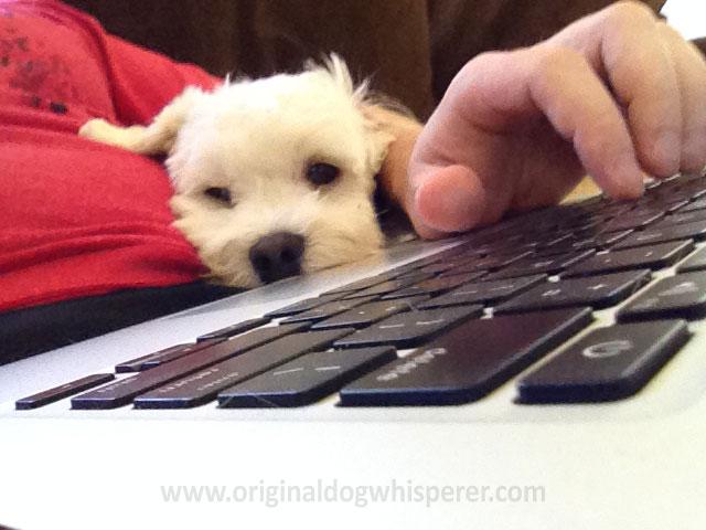 odw-Bustuh-laptop-v2