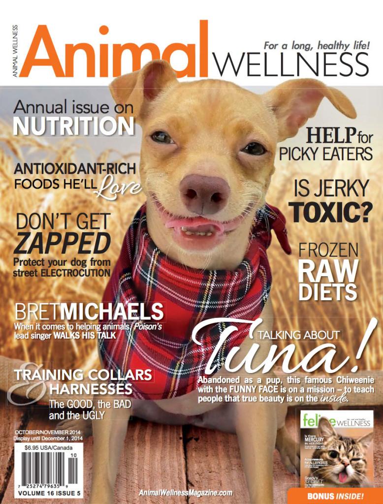 Animal Wellness - Dog Collars and Harnesses