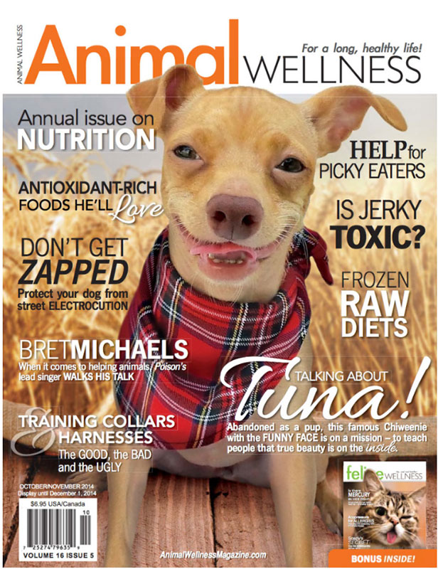 odw-animal-wellness-cover