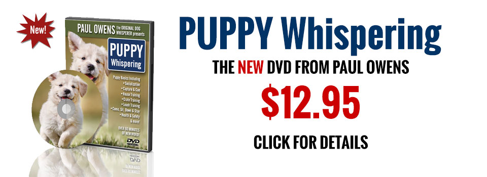 Dog Whisperer Dvd Puppy Training