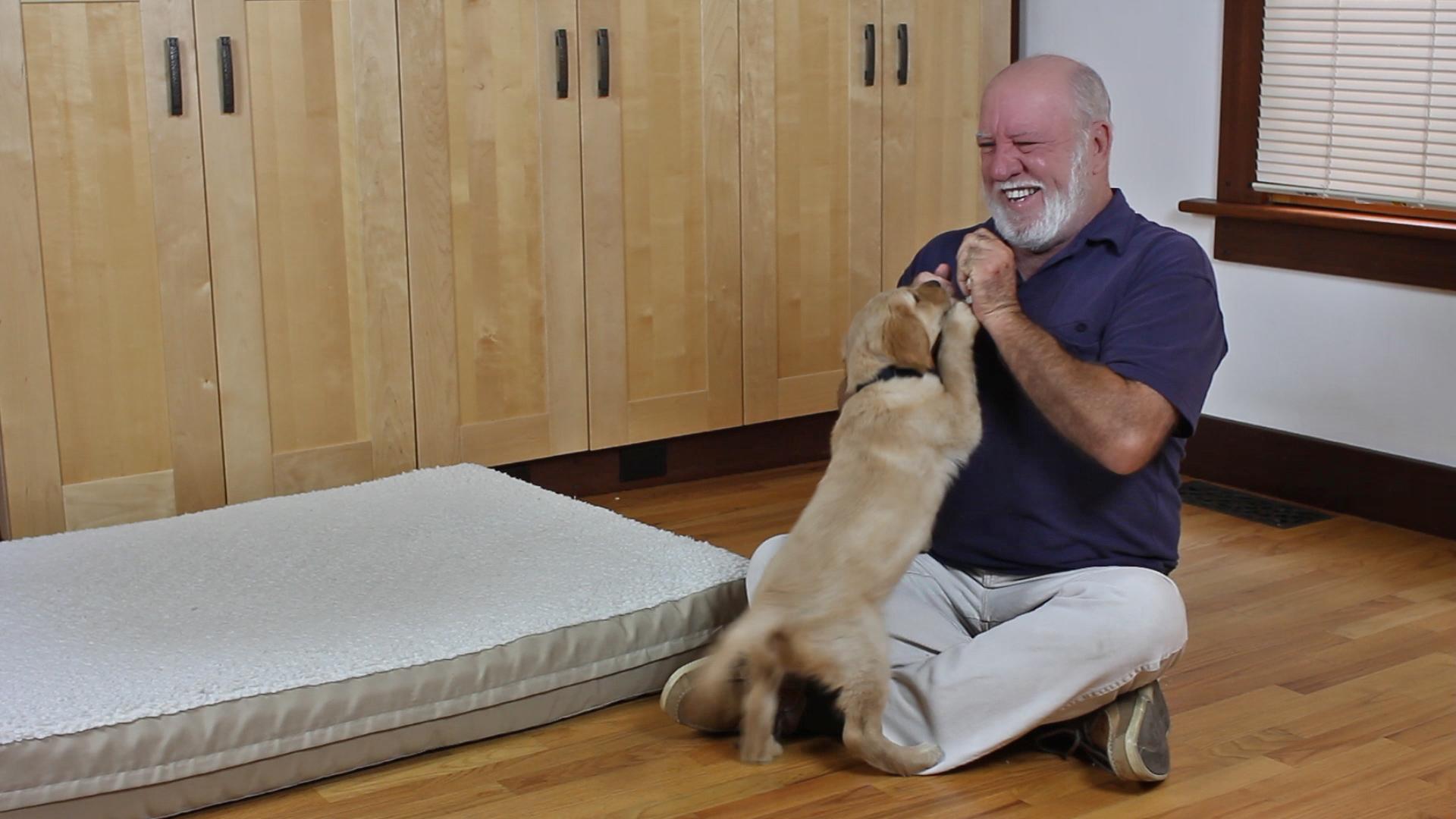 Positive Dog Training