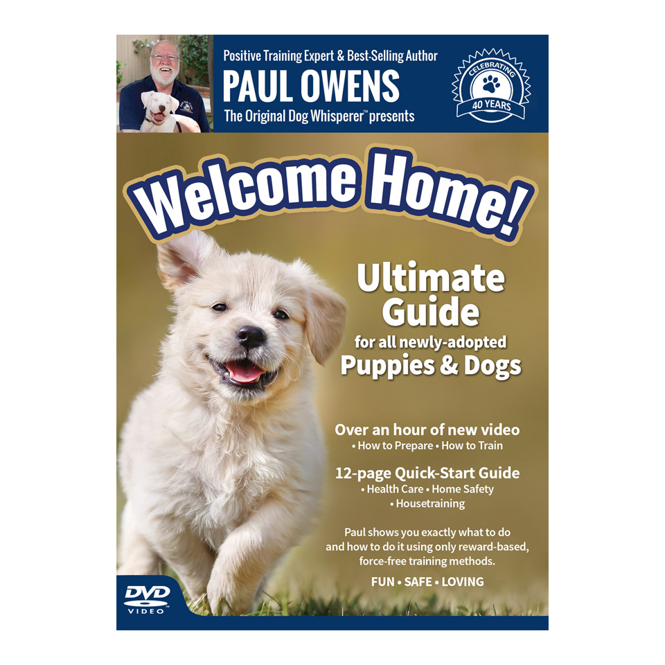 Dog Training Dvd Paul Owens The Original Dog Whisperer
