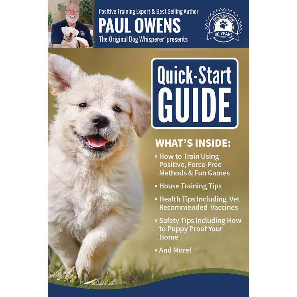Dog Training DVD